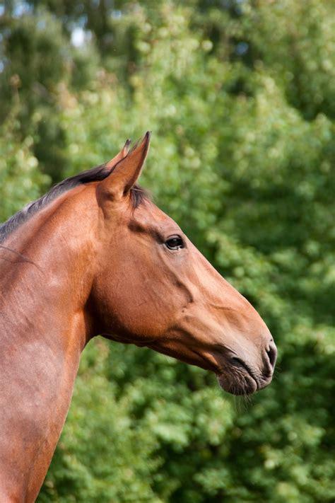 hindgut horse distress horses