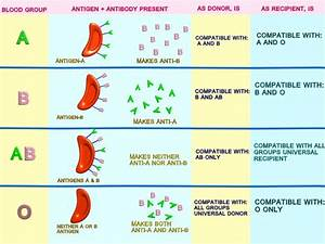 Manash  Subhaditya Edusoft   Blood And Immunity   Defence