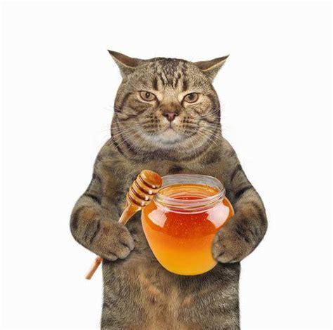 can cats eat honey roast ham