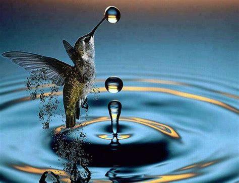 hummingbird birds pinterest