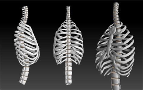 organi gabbia toracica dolore intercostale sinistro malattie cause dolori