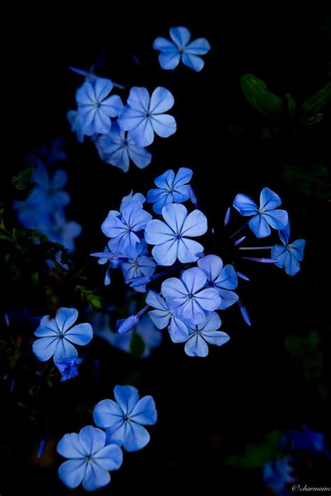 blue flower aesthetic wallpapers