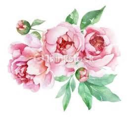 bouquet pivoine mariage pivoines avec feuilles aquarelle illustration thinkstock