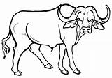 Buffalo Coloring Pages Animal Coloringway sketch template
