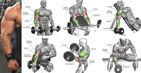 bicep workout program  ensure  biggest biceps fitness workouts exercises