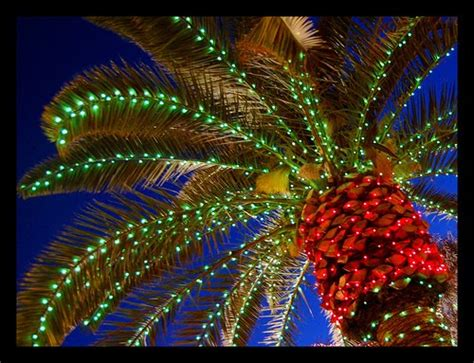 houses with christmas tree lites in palm springs palm trees phillip s world