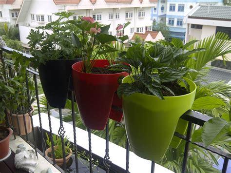 vasi da ringhiera fiori e piante ecco alcune fra le specie pi 249 decorative e