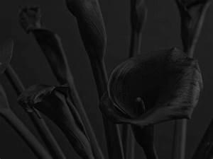 Mettre Twitter En Noir : des fleurs en noir sur fond noir pour des photos sombres ~ Medecine-chirurgie-esthetiques.com Avis de Voitures