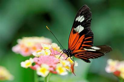 Zoom Insects Nature Butterfly Close Macro Desktop