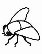 Fly Coloring Flies Printable Mosca Animales Animals Mouche Animaux sketch template