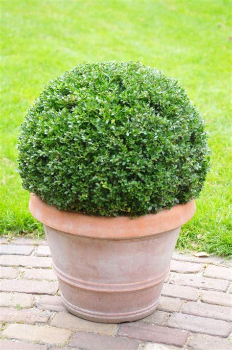Winterharte Pflanzen  Den Garten Das Ganze Jahr Lang