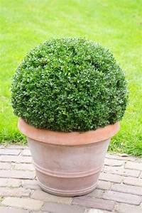 Garten Pflanzen : winterharte pflanzen den garten das ganze jahr lang sch n halten ~ Eleganceandgraceweddings.com Haus und Dekorationen