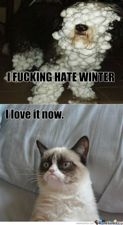 Grumpy Cat Snow Meme - cat in snow memes best collection of funny cat in snow pictures