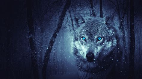 wolf predator photoshop art  hd wallpapers hd