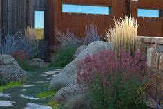 creeping thymes   grass  love creeping thymes  sustainable lawn alternatives