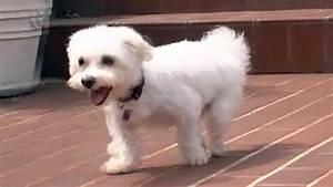 Laisser Un Chien Seul Quand On Travaille : bouleversant il coupe les pattes de son chien pour l 39 emp cher de s 39 chapper cause animale ~ Medecine-chirurgie-esthetiques.com Avis de Voitures