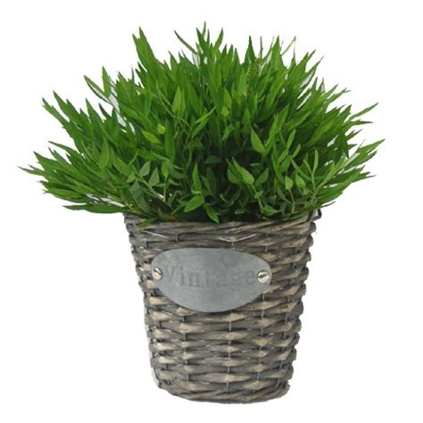 bambou d int 233 rieur 30 cm cache pot vintage plantes et
