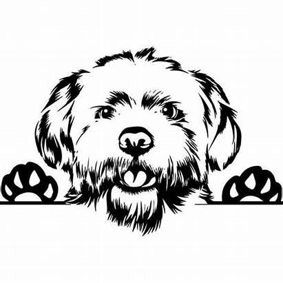 Dog Maltese Peeking Silhouette Coloring Animal Smiling