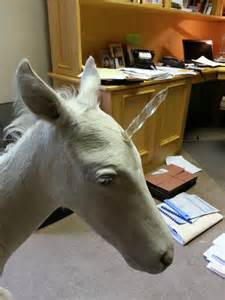Real Unicorn Horse Pegasus