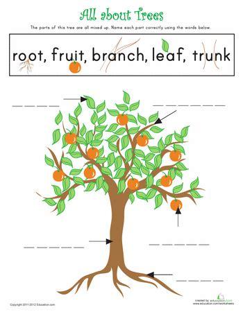 trees kindergarten writing science worksheets