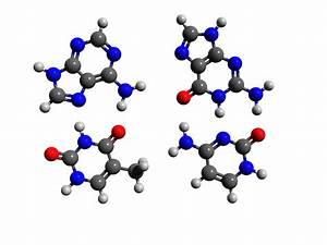Dna Base Pairs Adenine Thymine Guanine Cytosine By