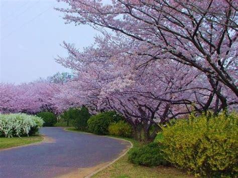 beautiful  dashing spring season wallpapers  hd