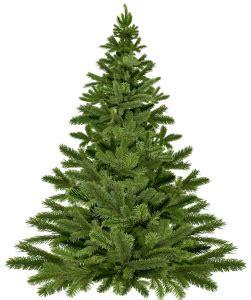 weihnachtsbaum kaufen worauf sollte man achten