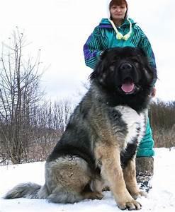 67 besten Dog is a friend of man. Bilder auf Pinterest ...