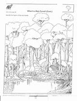 Rainforest Animals Label Layer Coloring Sheets Packet Geography sketch template