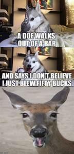 Bad Pun Dog | Bad pun dog | Pinterest | Bad pun dog, Pun ...