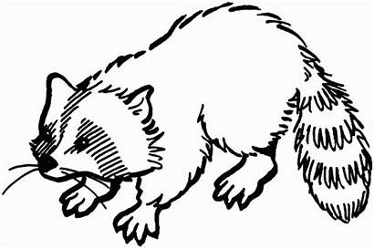 Raccoon Coloring Animals Pages Printable Sheknows Drawings
