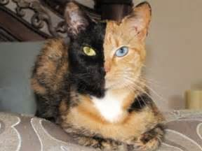 tortoiseshell cat personality cat do dr arnold plotnick the relationship between