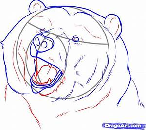How to Draw a Realistic Bear, Draw Real Bear, Step by Step ...