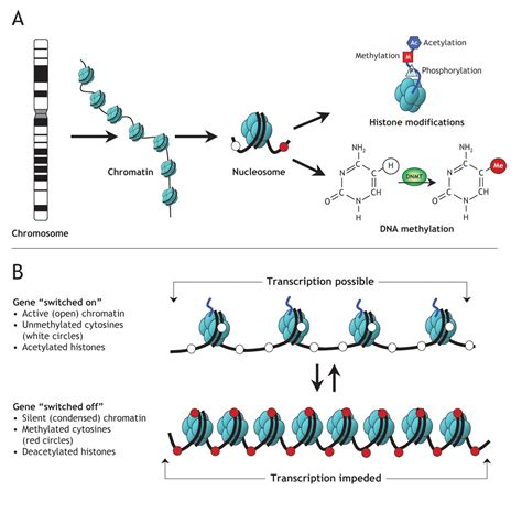 Modification To Dna by Epigenetics Made Easy Part 2 Alison Blogs Here