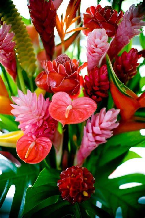die besten 20 tropical flowers ideen auf