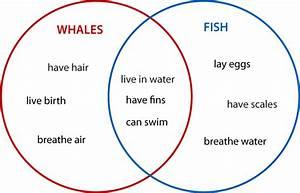 Create Venn Diagram Worksheets