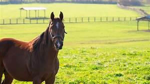 9news.com   QUIZ: Find out your Kentucky Derby horse name