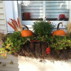 Fall Window Box Flower