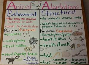 Animal Adaptations Anchor Chart  This Could Either Be Done