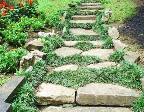 10+ Images About Dwarf Mondo Grass Lanscaping On Pinterest
