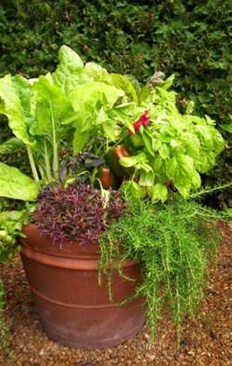 Top 10 Vegetables For Containers