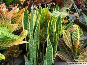 Plantes D39intrieur