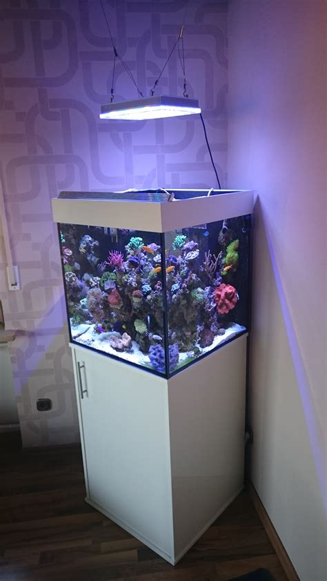 atlantik compact 24 inch cube reef aquarium orphek