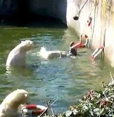 brunei delights  liverpool fan polar bear attack woman