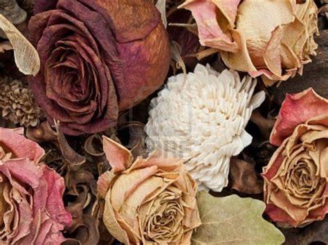 sognare fiori secchi fiori secchi magia dei fiori