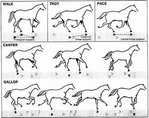 Large Animal Sx - Horse Terminology 1  By Drraythe  - Memorize Com