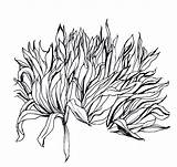 Bush Drawing Plant Line Shrub Draw Realistic Trees Drawn Drawings Bushes Google Outline Pencil Plants Tekening Untitled Afkomstig Van sketch template