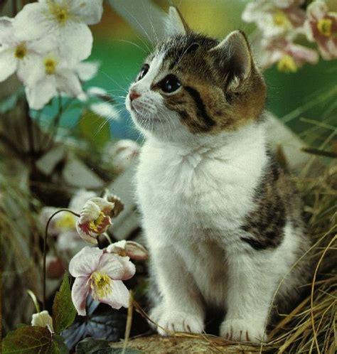 dress flower bayi black cat wallpaper