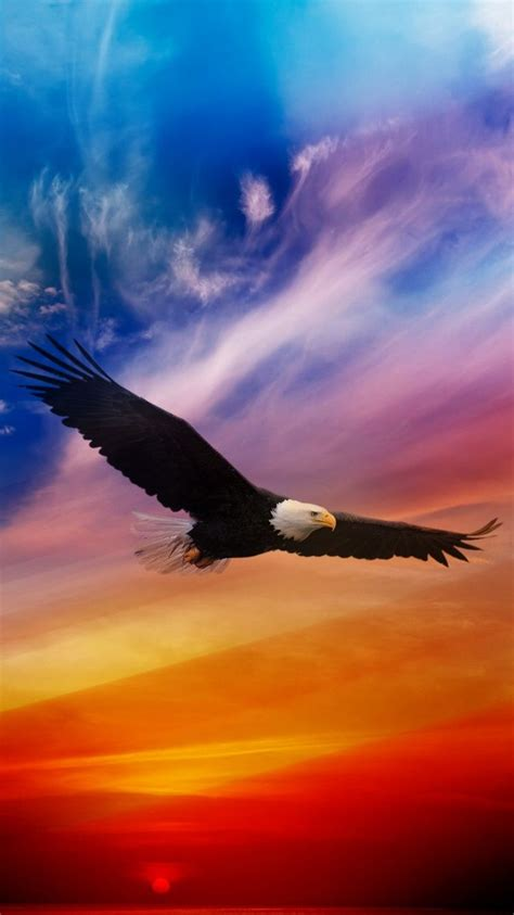 flying eagle dramatic sky iphone  wallpaper iphone