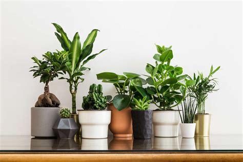 Pflanzen Für Wohnung by Pflegeleichte Zimmerpflanzen Unsere Top 10 F 252 R Wohnung